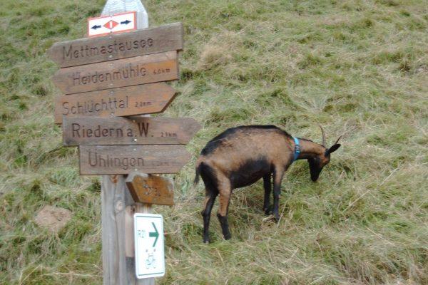 Wanderwege rund um Riedern