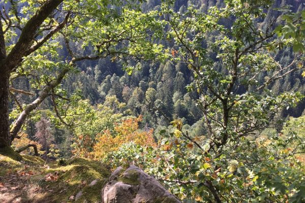 Wanderweg Rappenfelsensteig
