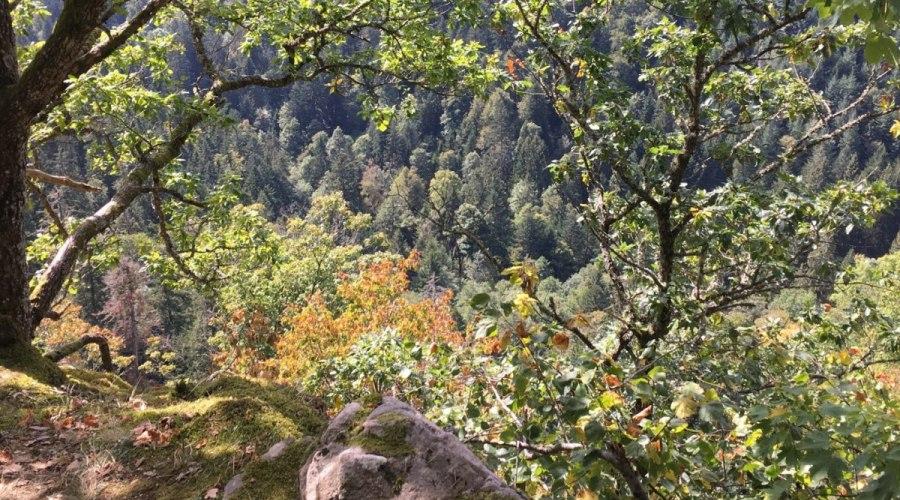 Wandern im Rothauserland